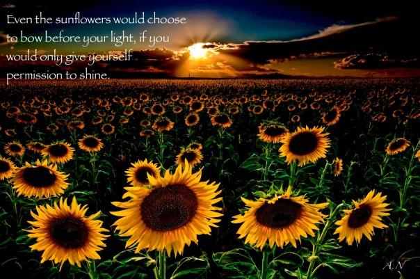 sunflowers-forever_2